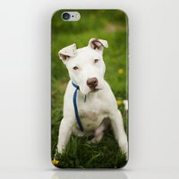 pit bull iPhone & iPod Skins featuring Pit Bull Puppy by Kaelyn Ryan Photography