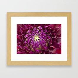 Dahlia Framed Art Print
