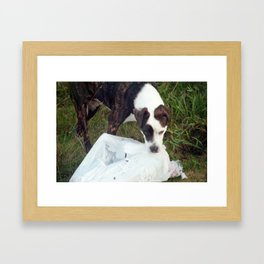 Hungry Stray Framed Art Print