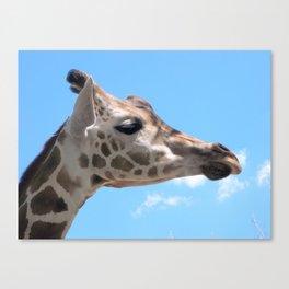 Disapproving Giraffe Canvas Print