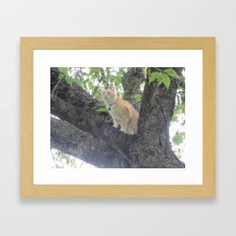 Kitty in a Tree Framed Art Print