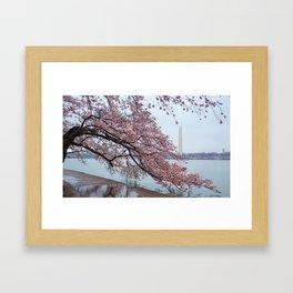 Cherry Blossum Test Framed Art Print