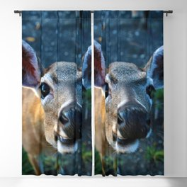 Key Deer Blackout Curtain
