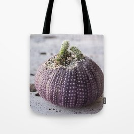Cactus Planter in sea shell of purple sea urchin Tote Bag