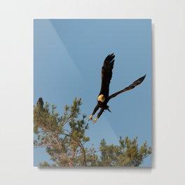 The Crow And Bald Eagle Metal Print