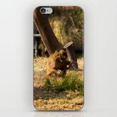 Monkey Business II iPhone & iPod Skin