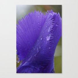Blue Gentian in the rain. Canvas Print