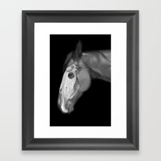 Equine Anatomy Framed Art Print