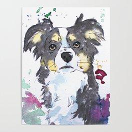 Miniature Australian Shepherd Design Poster