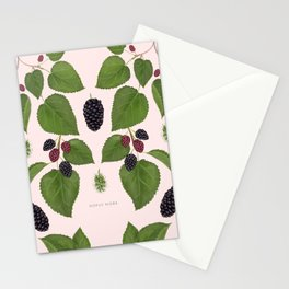 Black Mulberry Stationery Cards