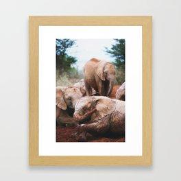 Baby elephants Framed Art Print