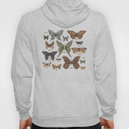 Butterflies and Moth Specimens Hoody