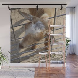 It really gets my goat when all those people stare at me Wall Mural