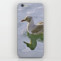 Seagulls Swim iPhone & iPod Skin