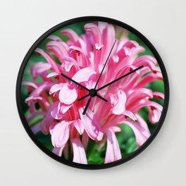 Brazilian Plume - Justicia carnea (Jacobinia carnea) Wall Clock