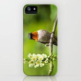 Hummingbird XVI iPhone Case