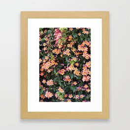 Tangerine Beauty Cross Vine Flowers Framed Art Print