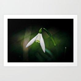 Snowdrop Art Print