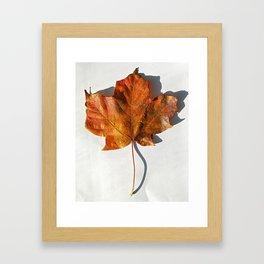 Red Leaf 1 Framed Art Print