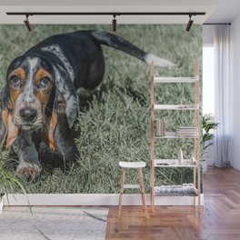 Basset Hound Puppy Droopy Ears Walking in Green Grass Cute Adorable Dog Photography Wall Mural
