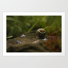 Traveling Snail Art Print