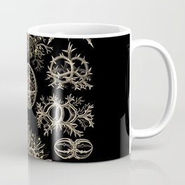 """""""Stephoidea"""" from """"Art Forms of Nature"""" by Ernst Haeckel Coffee Mug"""