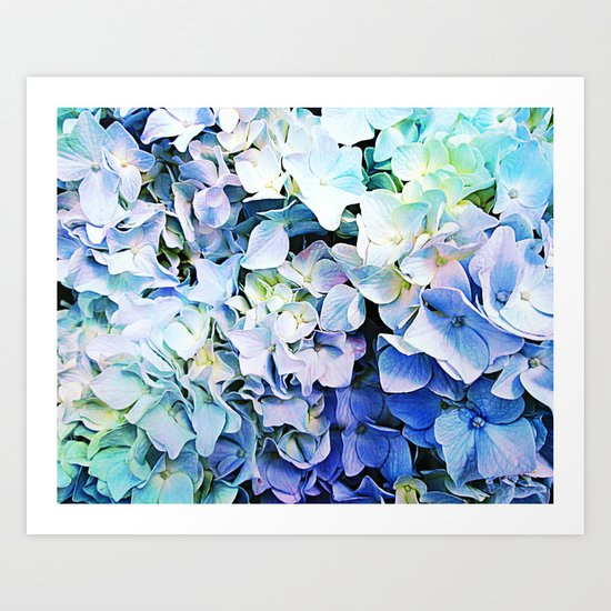 Soft Tri-Color Pastel Hydrangea Art Print