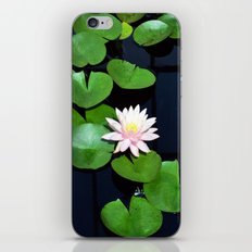 Lily pads and flower iPhone & iPod Skin