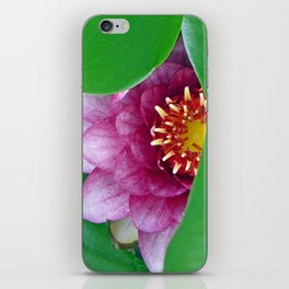 Pink Water Lily iPhone Skin