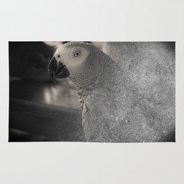 African Grey Parrot:  Ben's Portrait Rug