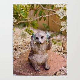 Meerkat.. Poster