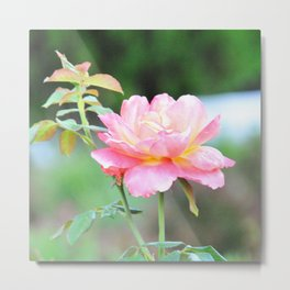 Pink Gold Rose Metal Print