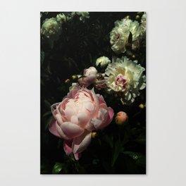 Peony 12 Canvas Print
