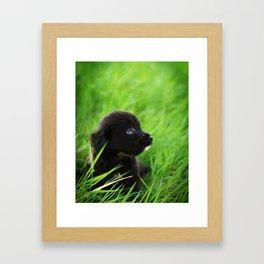 Shelter Puppy Framed Art Print