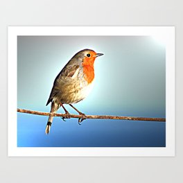 Robin Bird on Wire, Lonely Love Blue Photography Art Print