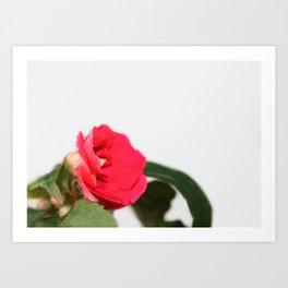 small red flower Art Print