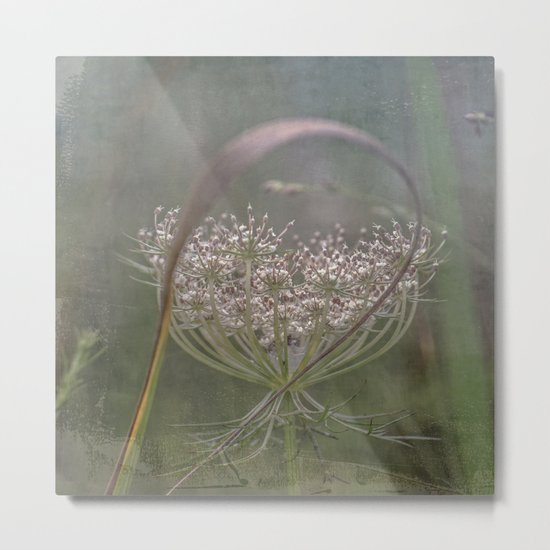 Queen Anne's Lace Botanical Series 5-9 #9 Metal Print