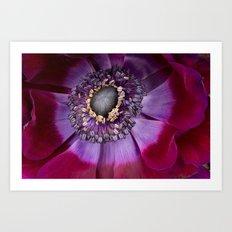 Anemone Coronaria - Macro Art Print