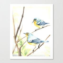 Adelaide's Warbler Canvas Print