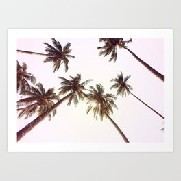 Palm Trees And Pink Sky Art Print