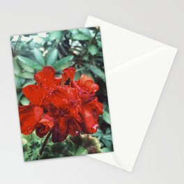 After rain or Early morning? Stationery Cards