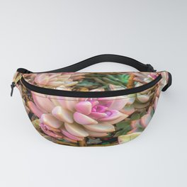 closeup pink and green succulent plant garden Fanny Pack