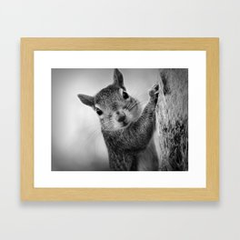 Staring Squirrel in Black and White Framed Art Print