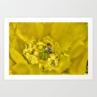 Rainy Day Cactus Flower Bee Art Print