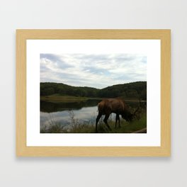 Lone Elks Framed Art Print