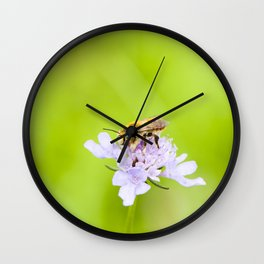 A bee on a flower Wall Clock