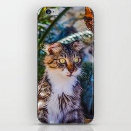 Funny Kitty Cat iPhone Skin