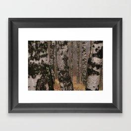 Берёзки Framed Art Print