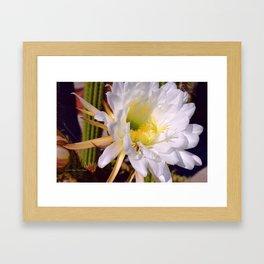 """Cactus Flower And Friend #1"" Photograph Framed Art Print"