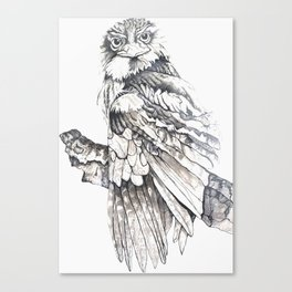 Tawny Frogmouth Owl Canvas Print
